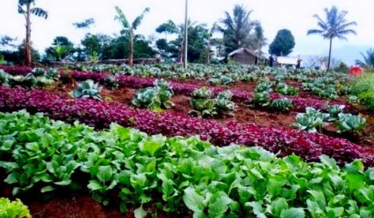 Pertanian Organik untuk Kesehatan
